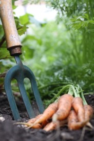 5 Reasons to Grow Vegetables for National Gardening Month
